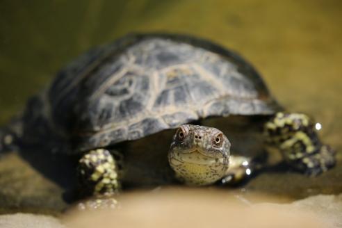 Turtle Nest: Angle 2: